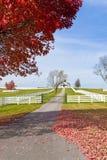 De recente Herfst bij platteland. Stock Afbeeldingen