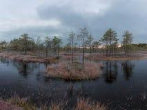De recente herfst in het moeras royalty-vrije stock afbeeldingen