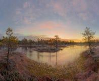 De recente herfst in het moeras stock fotografie