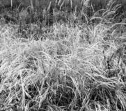 De recente herfst De jacht Droog gras in de weide royalty-vrije stock fotografie