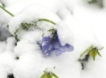 De recente Sneeuw van de Lente Stock Foto's