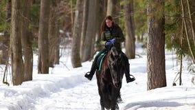 De recente Winter Een vrouw die op een paard in het bos op een sneeuwgrond bij zonnig weer lopen stock videobeelden