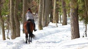 De recente Winter Een vrouw die op een paard in het bos op een sneeuwweg lopen stock footage