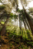De recente zomerzonlicht het breken door de bomen bij een mystieke steeg Stock Fotografie