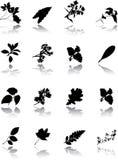 De reeks bladeren Stock Foto