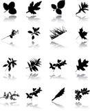 De reeks bladeren Royalty-vrije Stock Foto's