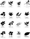 De reeks bladeren Stock Foto's