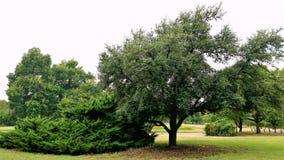 De reeks bomen royalty-vrije stock fotografie