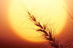 De reeks en het gras van de zon Stock Foto's