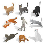De reeks isometrische beeldverhaalkatten in verschillend stelt Stock Fotografie