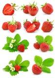 De reeks rode aardbeivruchten met groen doorbladert Royalty-vrije Stock Fotografie
