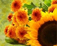 De reeks van canvaszonnebloemen vector illustratie