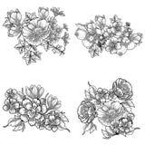 De reeks van de bloem Royalty-vrije Stock Foto