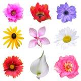 De reeks van de bloem Stock Afbeeldingen