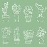 De reeks van de cactus Stock Foto