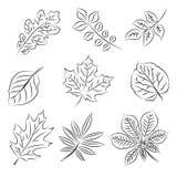 De reeks van de de bladerenschets van de herfst Stock Afbeelding