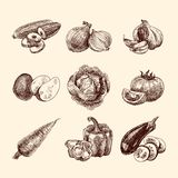 De reeks van de groentenschets royalty-vrije illustratie