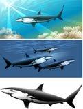 De reeks van de haai Royalty-vrije Stock Afbeelding