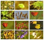 De reeks van de herfst Stock Afbeeldingen