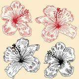 De Reeks van de hibiscus Royalty-vrije Stock Afbeelding