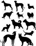 De reeks van de hond Stock Afbeeldingen