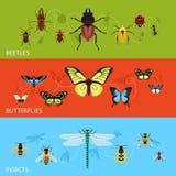 De reeks van de insectenbanner Stock Afbeelding