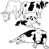 De Reeks van de koe Stock Afbeeldingen