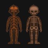 De Reeks van de menselijk Lichaamsanatomie Skeletonand Zenuwstelsels Vector royalty-vrije illustratie