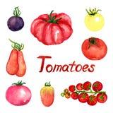 De reeks van de tomatenverscheidenheid Royalty-vrije Stock Foto