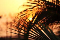 De reeks van de zon Royalty-vrije Stock Afbeeldingen