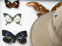 De reeks van Entomolog Stock Foto's