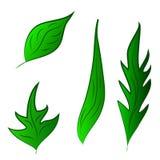 De reeks van groen doorbladert vectorillustratie Royalty-vrije Stock Foto's