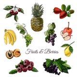 De reeks van hand trekt gekleurde schets van verschillende bessen en vruchten met geïsoleerde bladeren op witte achtergrond vector illustratie