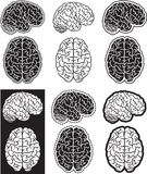 De reeks van hersenen Stock Foto