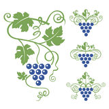 De reeks van het druivenpictogram Royalty-vrije Stock Afbeeldingen