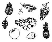 De reeks van het fruit en van de krabbel van Groenten Stock Foto's