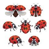 De reeks van het insectonzelieveheersbeestje, leuke kleine rode insecten royalty-vrije illustratie