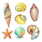 De reeks van het onderwaterleven heeft - illustraties van diverse tropische zeeschelpen en zeester bezwaar vector illustratie