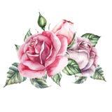De reeks van het rozenelement De kaart van het waterverfhuwelijk Royalty-vrije Stock Foto's