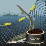 De reeks van steurvissen royalty-vrije illustratie