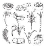 De reeks van de suikerrietinstallatie, de landbouw en landbouwschets vector illustratie