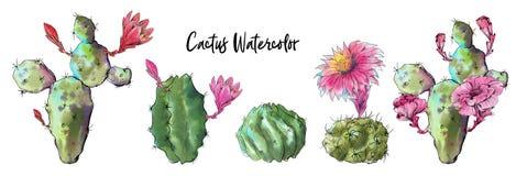 De reeks van de waterverfcactus op witte achtergrond wordt geïsoleerd die royalty-vrije stock foto's