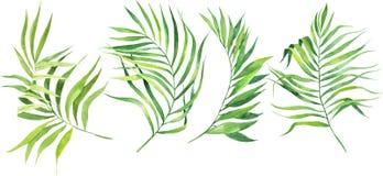 De reeks van de waterverfillustratie tropische bladeren Kokosnotenpalmbladen Dichte wildernis royalty-vrije illustratie