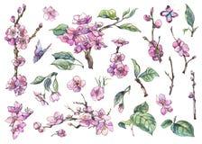 De reeks van de waterverflente van uitstekende bloemenelementen bloeiende tak vector illustratie