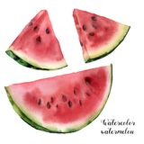 De reeks van de waterverfwatermeloen Hand geschilderde die watermeloenplak op witte achtergrond wordt geïsoleerd Zoet dessert Voe vector illustratie