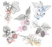 De reeks vectorillustratie van schetsbessen Royalty-vrije Stock Afbeelding
