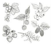 De reeks vectorillustratie van schetsbessen Royalty-vrije Stock Afbeeldingen