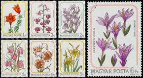 De reeks zegels in Hongarije worden gedrukt toont lelies die Royalty-vrije Stock Foto