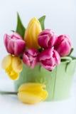 De regeling van de lente van roze en gele tulpen Stock Afbeeldingen