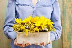 De regeling van de vrouwenholding van zonnebloemen in houten doos Stock Afbeelding